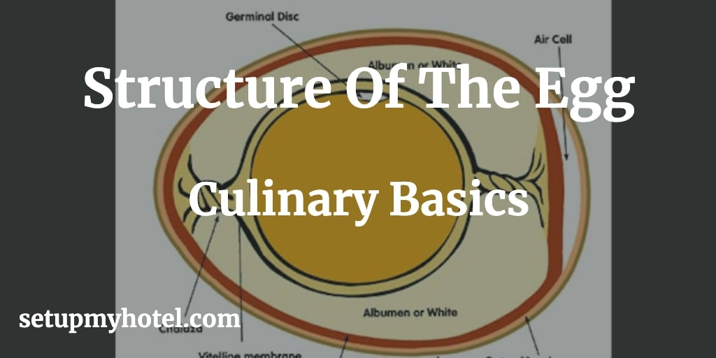 Structure of Egg, Composition of Egg, Define the Egg Structure for Culinary Education